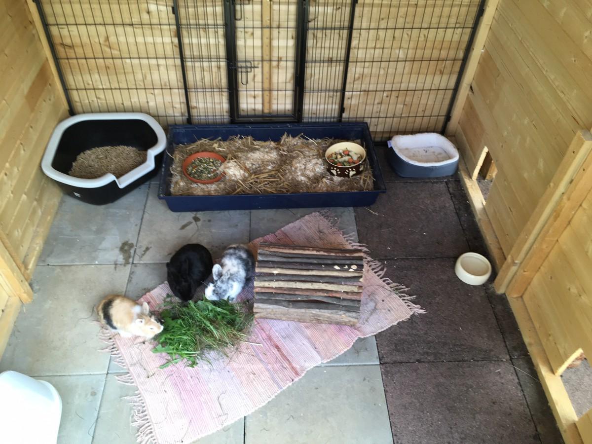 Kleintierbetreuung bei mir